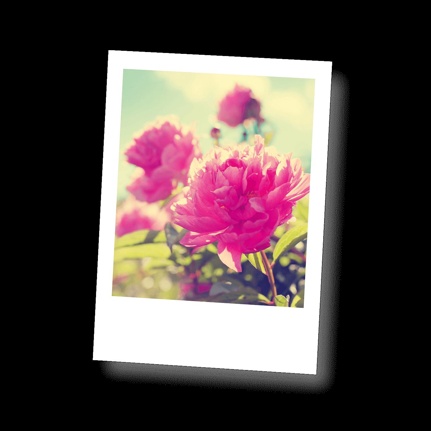 Postkarten Blütenportraits