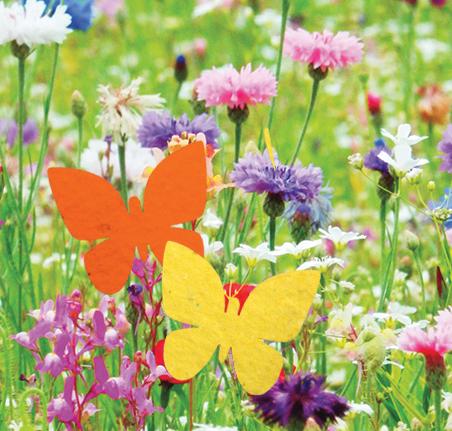 Saatpapier Schmetterlinge